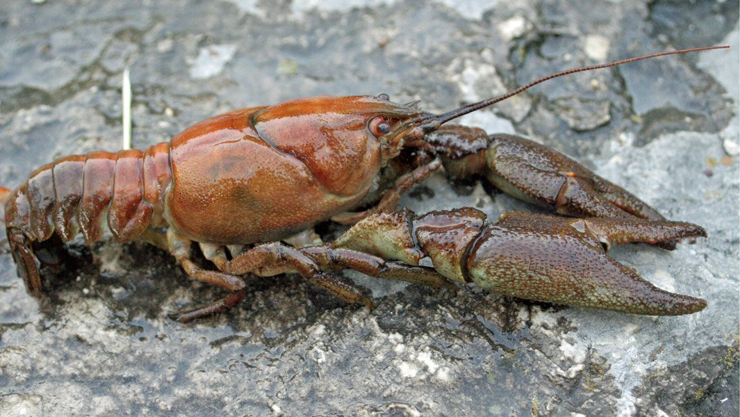 World Peace Wetland Prairie: Burrowing crayfish common at ...