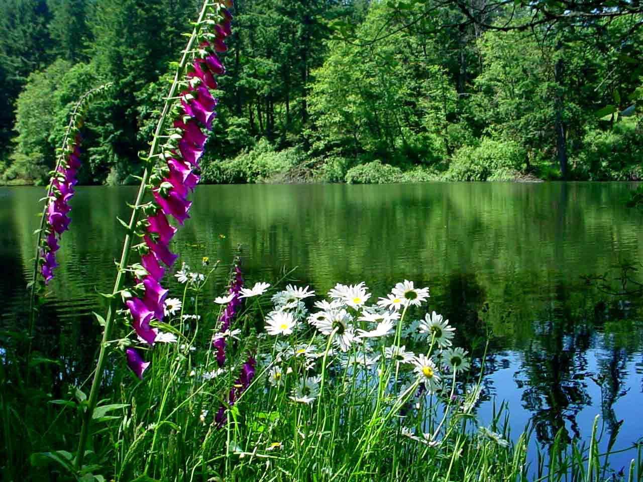 Living Pond